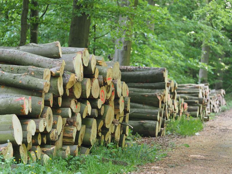 Holz Aus Nrw Verkauf Und Vermittlung Wald Holz