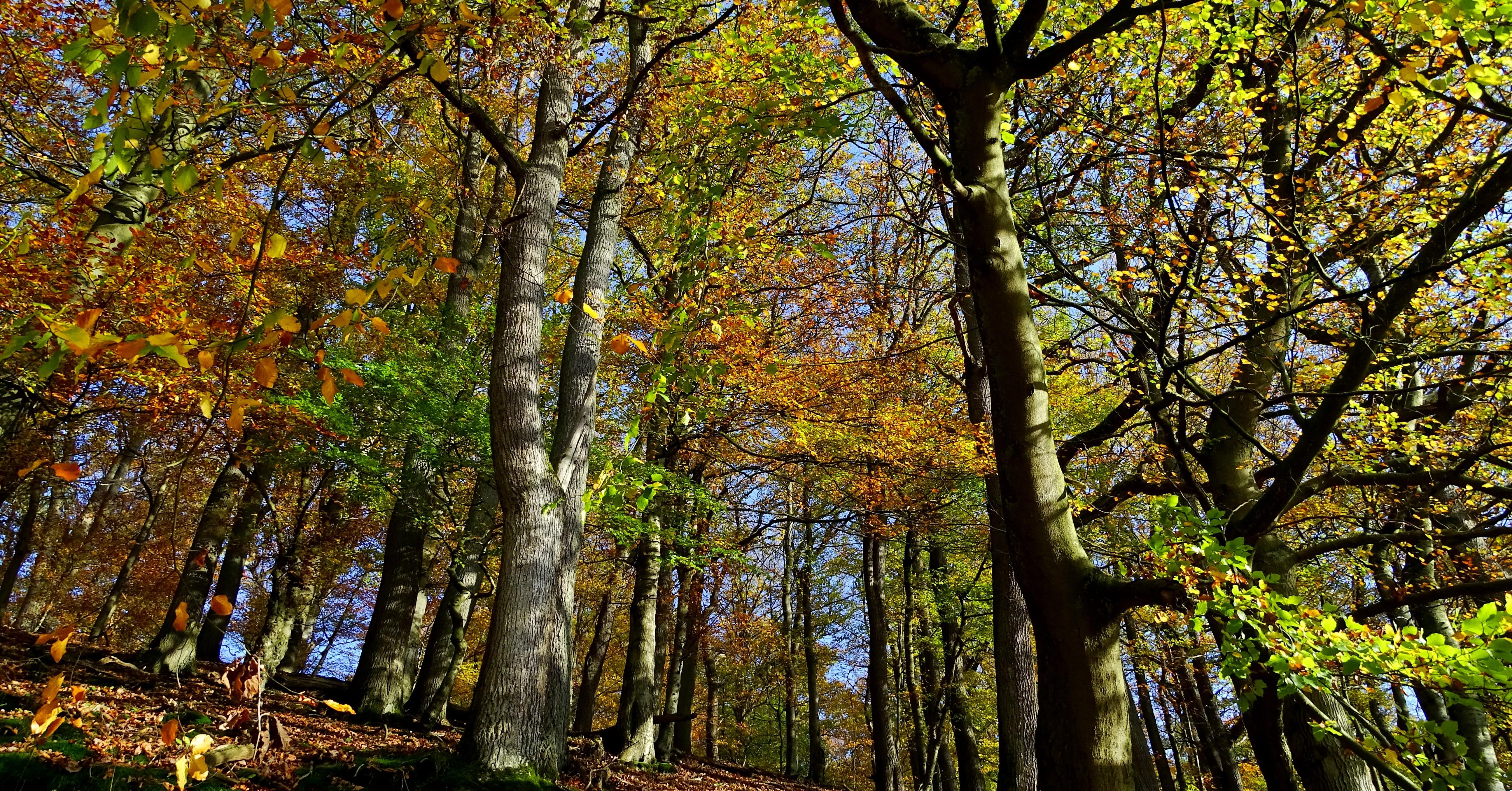 Herbst im Wald der Wisente | Wald & Holz