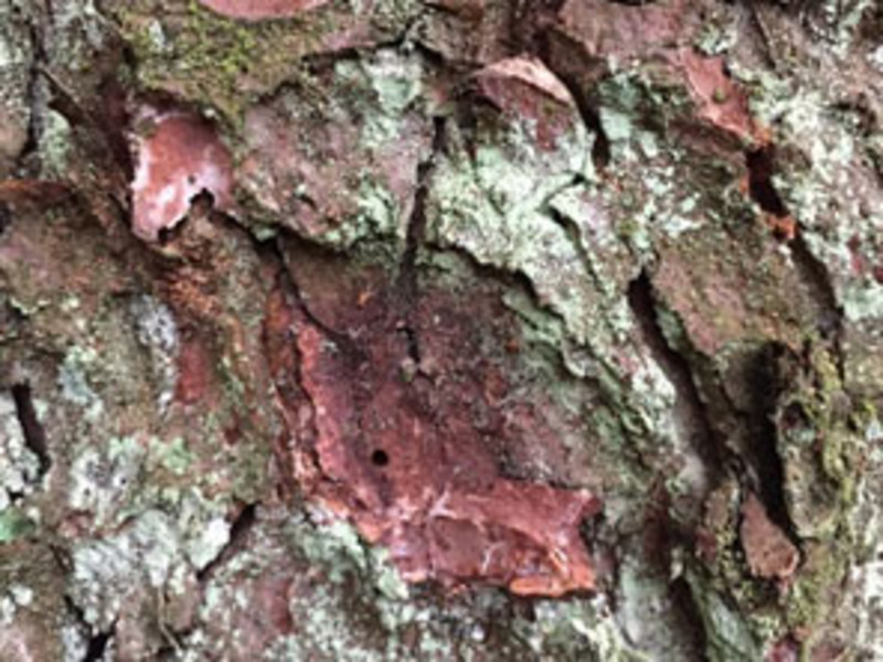 Etwas Neues genug Borkenkäfer im Fichtenwald | Wald & Holz @AA_46