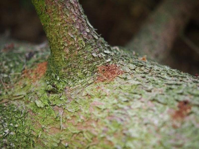Top Borkenkäfer im Fichtenwald | Wald & Holz @QK_51